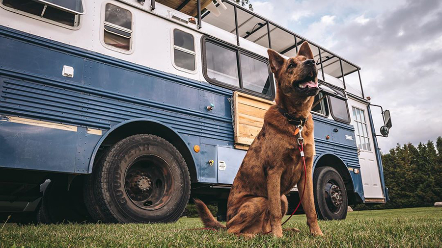 aimless travels dog outside beautiful bus conversion