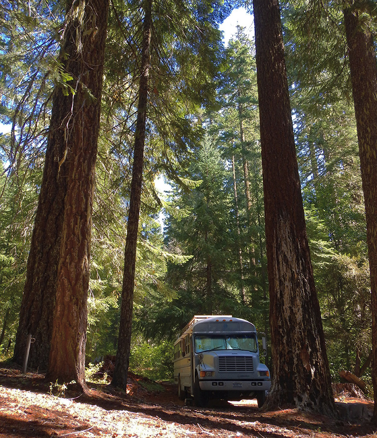 skoolie love california redwooms camping