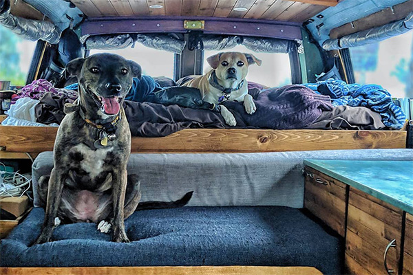 Leaving Pets alone in the Van?
