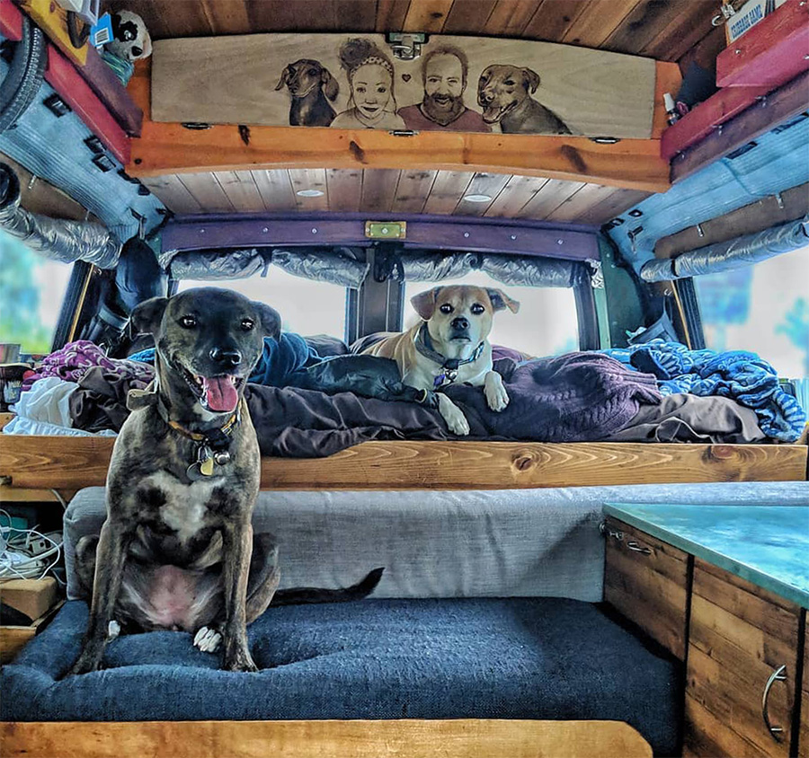 900 dogs van life alone leave